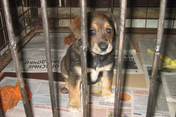 Самое одинокое сердце! Месячного щенка подбросили в приют, где никто к нему не подходил… чтобы спасти!