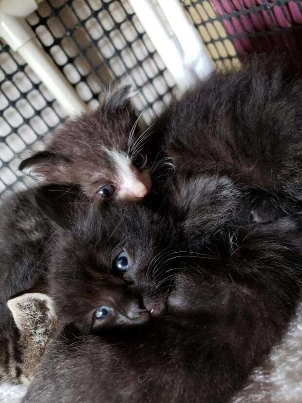 Мама-кошка отвергла этого котенка из-за его крошечных размеров, но помощь пришла вовремя