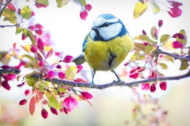 Птица. Фото: pixabay.com