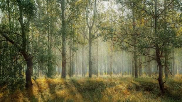 """Ученые из Челябинска разработали очищающие воздух """"искусственные деревья"""""""