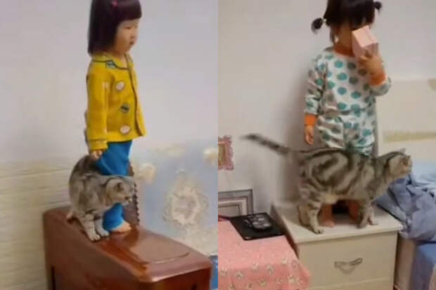 Пушистый ангел: кошка, защищающая ребенка отпадения, восхитила соцсети