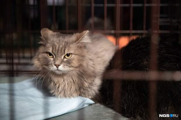 В Новосибирске прошла ярмарка по раздаче животных — посмотрите на котов и собак, которые ищут дом