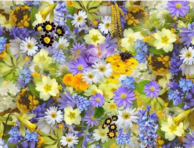 «Лидер» предложил в Татьянин День сделать для именинниц цветочную композицию
