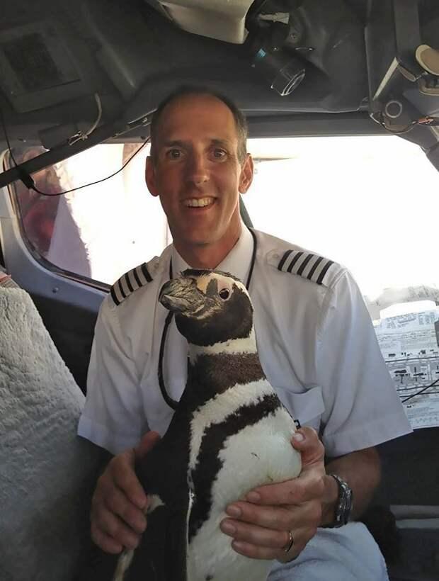 31. Еще один летающий пингвин борт, животные, пассажир, перелет, полет, самолет, фото