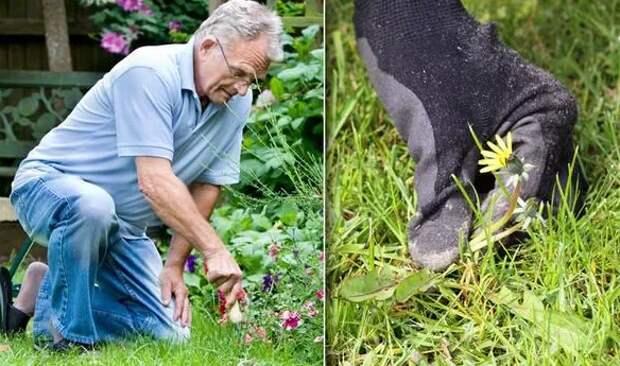 Как избавиться от сорняков на лужайке: несколько способов уберечь сад от полевых цветов