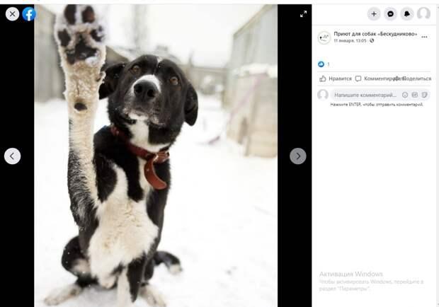 «Киви Дэнс» станцует для собак из бескудниковского приюта