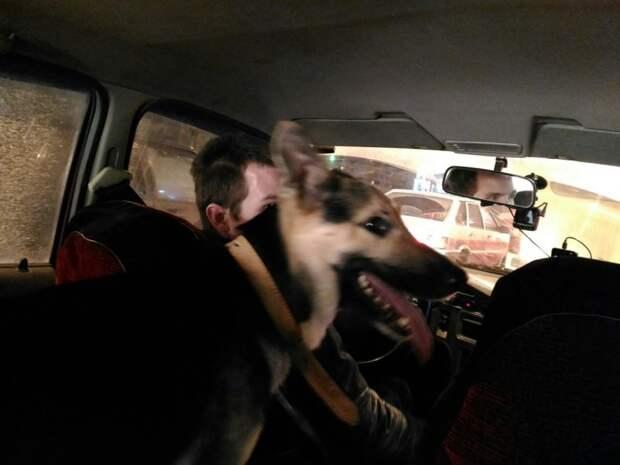 Дверь машины открылась, и на землю упала перепуганная собака дачи, пес, приют, собака