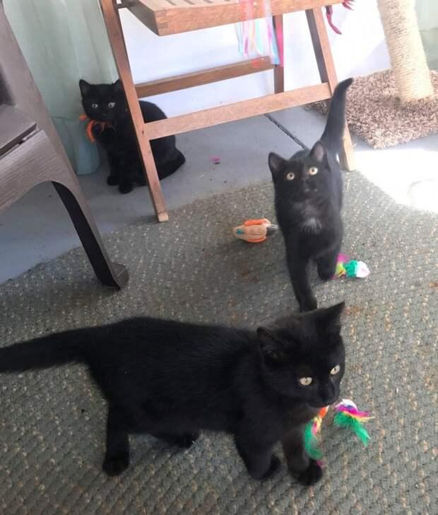 Люди увидели котенка, застрявшего в пластиковом стаканчике и решили помочь. И вот что вышло...
