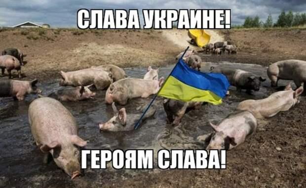 Свиньи голодными будут: в Сети показали, чем кормят «всушников» (ФОТО)