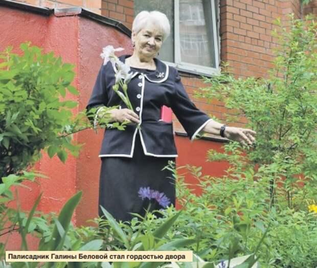 Жительница дома на улице Маршала Жукова посадила в своем дворе ирисы и лилии