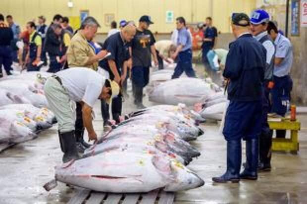 Рыбка за миллион. 8 самых дорогих продуктов мира