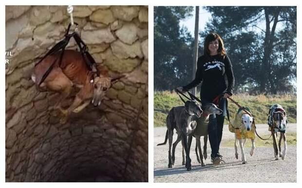 Не в ответе за тех, кого приручили: почему испанские охотники массово бросают борзых погибать