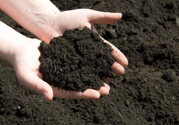 Как сделать землю плодородной и мягкой?