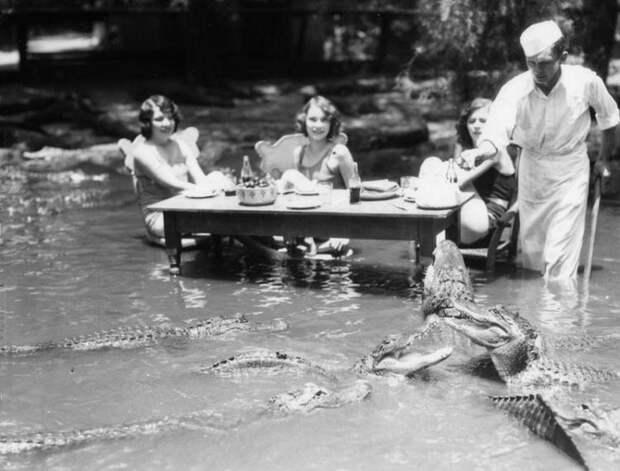 Странные развлечения прошлого: пикник среди аллигаторов