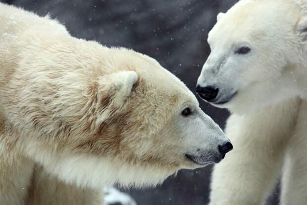 20 фактов о животных, которые вызовут приступ умиления!