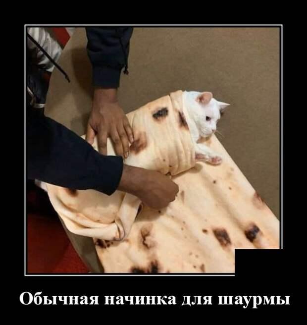 Демотиватор про шаурму и кота