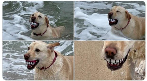 15 забавных фотографий собак, которые заставят вас громко смеяться