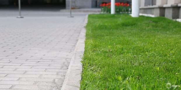 Газон во дворе на Волгоградском будет восстановлен — Жилищник