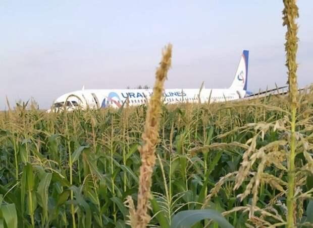 Пилот приземлившегося на кукурузном поле самолета вернулся на работу