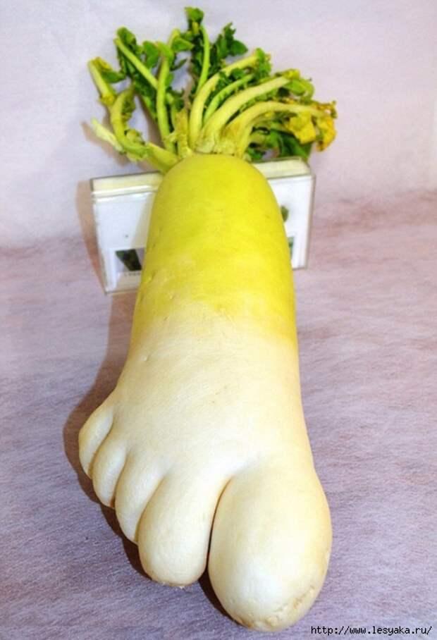 10294565-unusual-shape-fruit-vegetables-8__605-650-1466428998 (477x700, 220Kb)