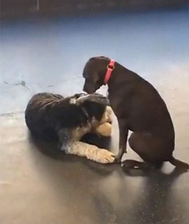 Добрая собака, которая гладит лапой своих собратьев, влюбила в себя пользователей Сети