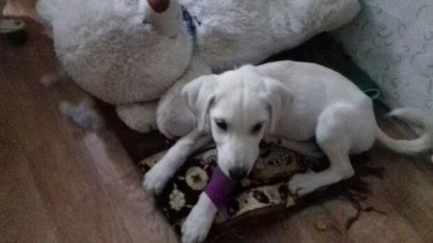Три белых щенка оказались не нужны своим хозяевам белый щенок, щенок