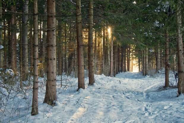 В парке «Москворецкий» пройдёт творческий фестиваль по рисованию на снегу