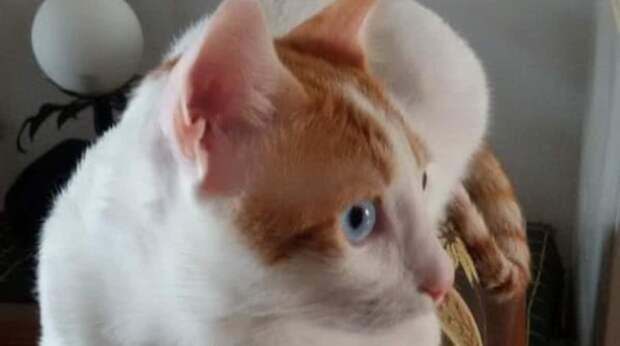 На улице в жару горько плакал котёнок. Рабочие нашли его в пакете с отходами и выпустили, предоставив судьбе