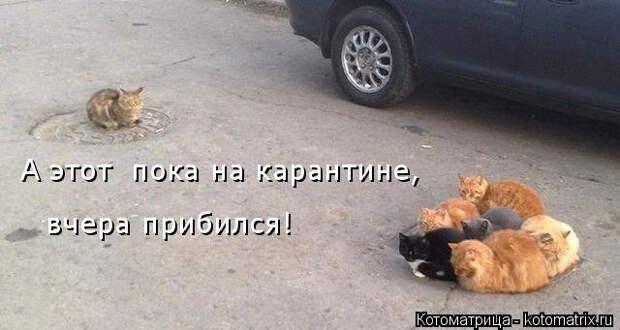 kotomatritsa_K4 (640x341, 126Kb)