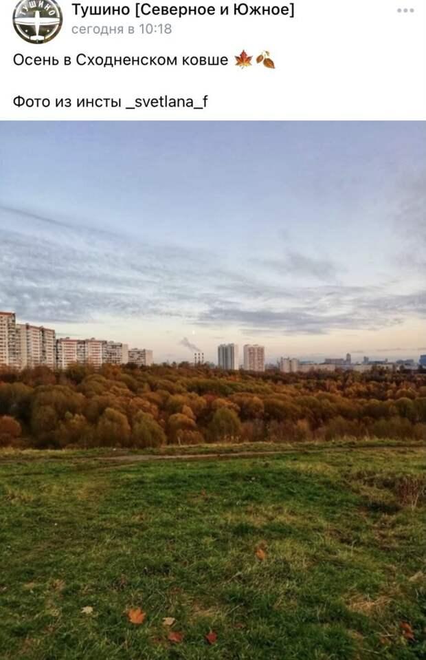 Фото дня: рыжий лес в Сходненском ковше