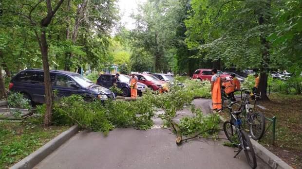 На Академика Комарова из-за ветра упало дерево