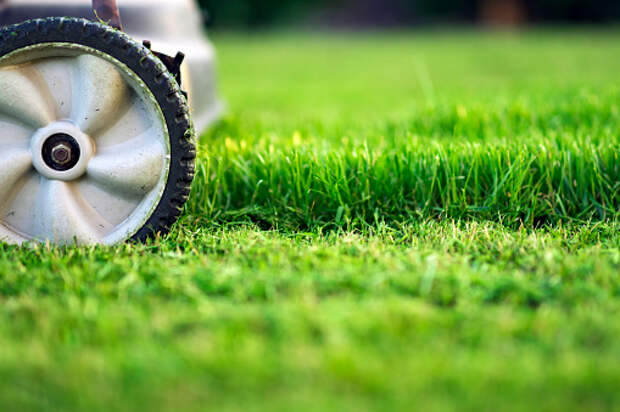 Во дворе дома на Кашенкином Лугу убрали скошенную траву