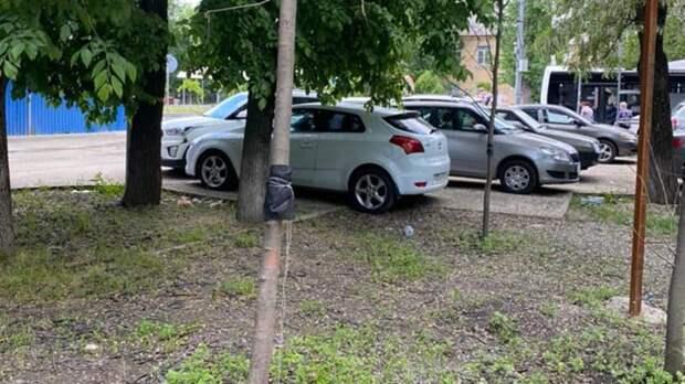 Более 400 высаженных весной деревьев погибли вРостове-на-Дону