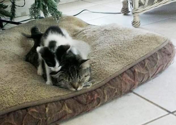 Кошка, которую взяли с улицы, сама однажды принесла в дом маленького котенка