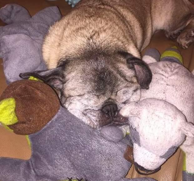 Она семь лет беспрерывно рожала щенков. Но то, что случилось с ней после этого, просто фантастика!