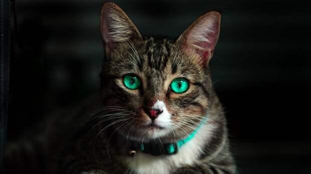 Как кот наплакал: почему считается, что кошки на самом деле не умеют плакать