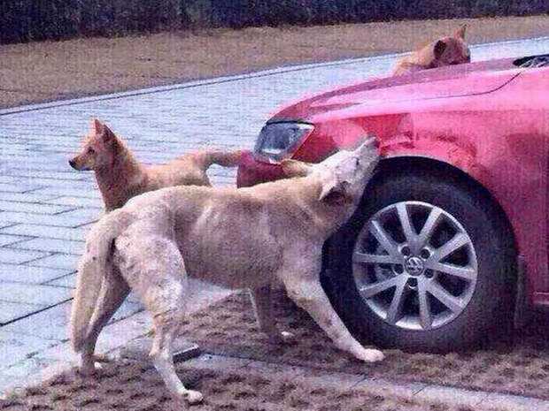 Может ли животное мстить