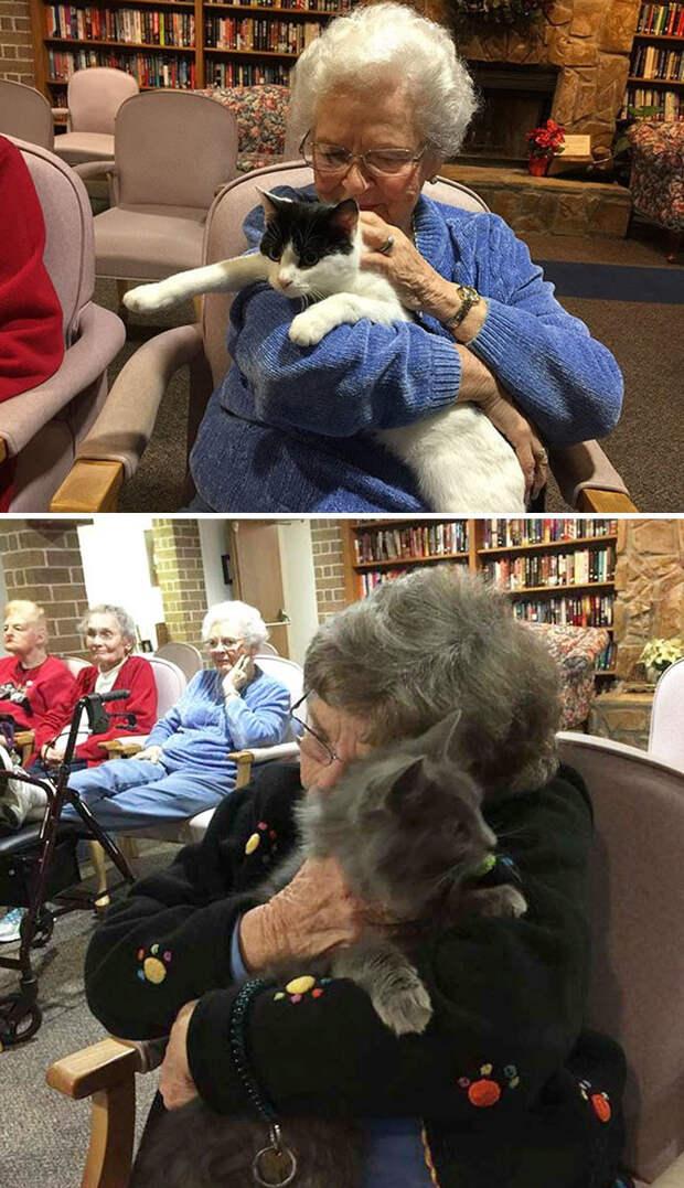 Кошачий приют привозит пожилых кошек к жильцам приюта для престарелых, чтобы животные и люди могли пообщаться друг с другом Счастливый конец, животные, спасение
