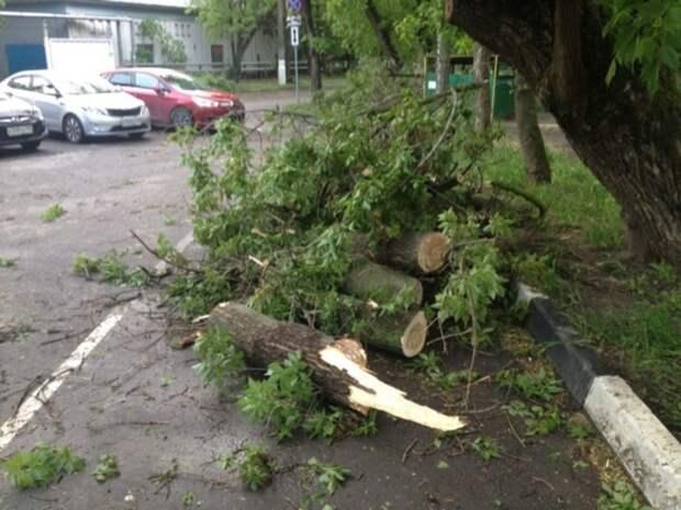 В Москве девять машин пострадали из-за упавших от сильного ветра деревьев