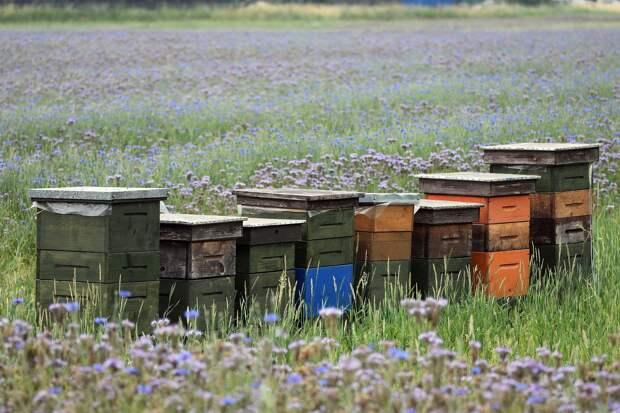 В Удмуртии оценят ущерб от массовой гибели пчел