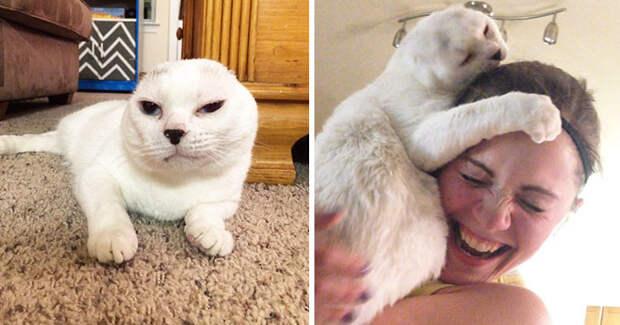 Женщина взяла в дом старого безухого кота, которого никто не хотел брать. Позже он помог ей справиться с тревожностью Счастливый конец, животные, спасение