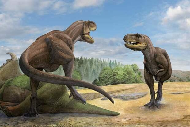 Палеонтологи узнали, как охотились тираннозавры 74 миллиона лет назад