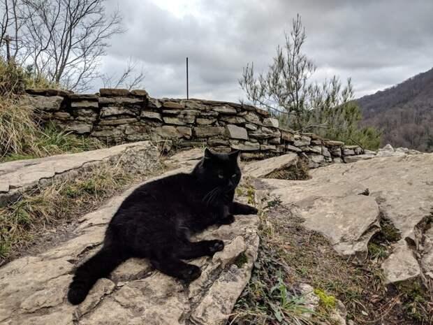 Привал Хвостатые, братья наши меньшие, город, кот, кошка, улица, уличные кошки, эстетика