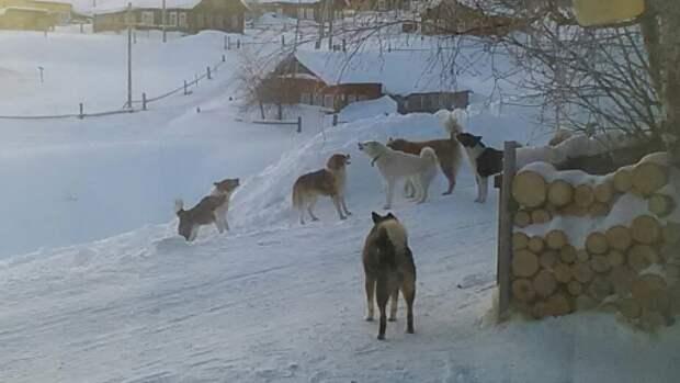 Стая бродячих псов растерзала ребенка в Башкирии
