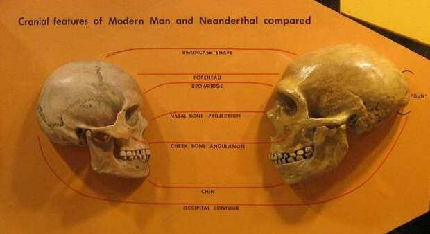 Гены творчества Homo Sapiens оказались «секретным оружием» для выживания нашего вида