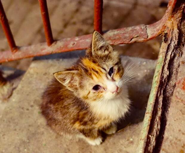 Подарите малышам шанс на жизнь, не дайте погибнуть.....