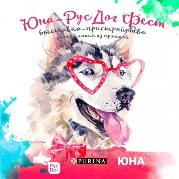 4 июня в Москве состоится Юна РусДог Фест — выставка-пристройство собак и кошек из приютов