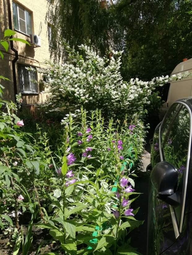 Мой сад за июнь