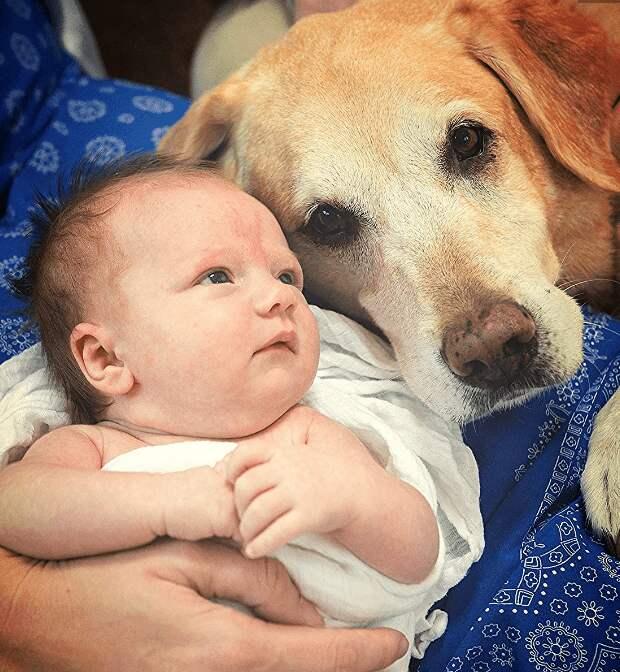 Семья клонировала пса, который спас беременную хозяйку, чтобы он мог заботиться и о её детях