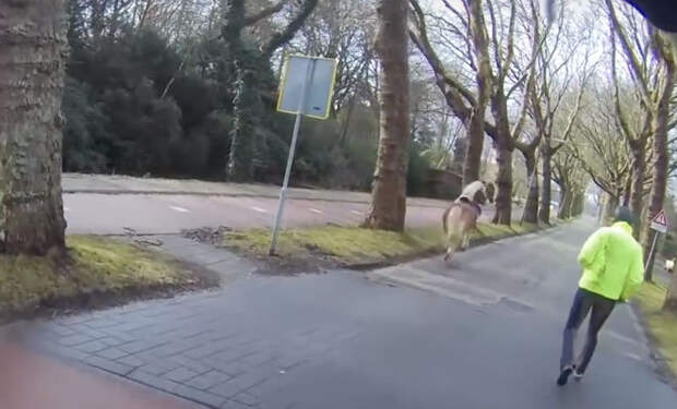 Мотоциклист увидел бегущего испуганного коня и пришел на помощь